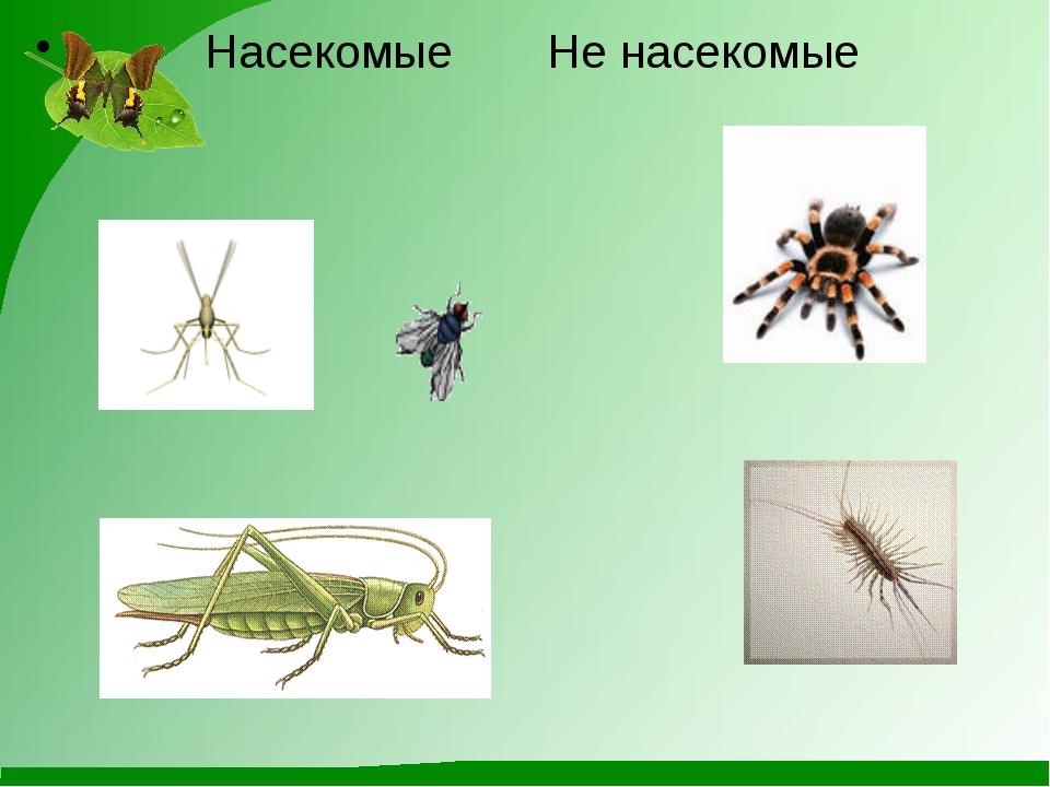 Насекомые Не насекомые