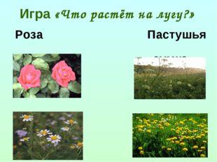 Игра «Что растёт на лугу?» Роза Пастушья сумка Ромашка Одуванчик