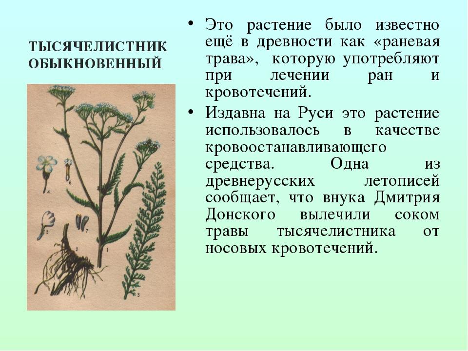 ТЫСЯЧЕЛИСТНИК ОБЫКНОВЕННЫЙ Это растение было известно ещё в древности как «ра...