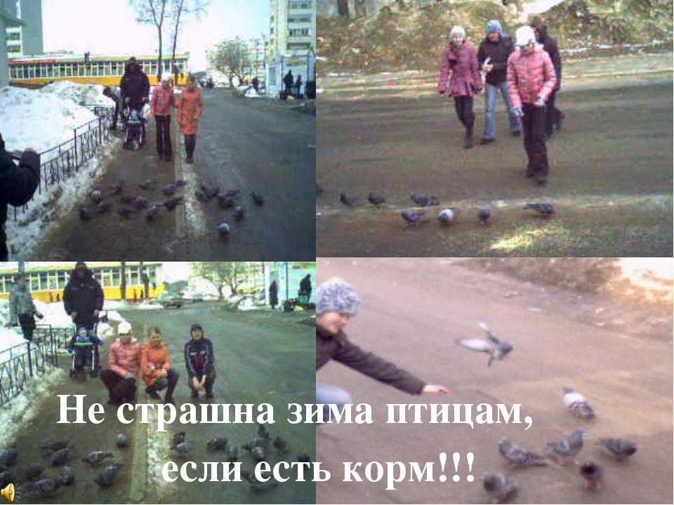 О чем они просят? Как же мы им можем помочь? Не страшна зима птицам, если ест...