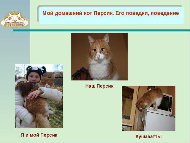 Мой домашний кот Персик. Его повадки, поведение Наш Персик Кушааатть! Я и мо...