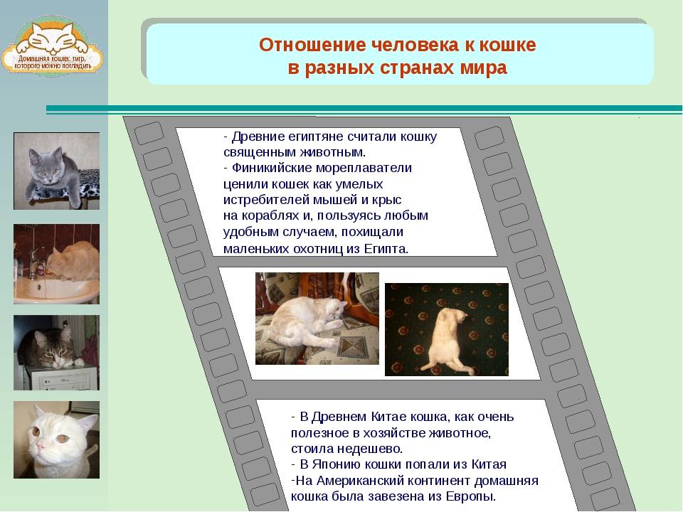 Отношение человека к кошке в разных странах мира - В Древнем Китае кошка, ка...
