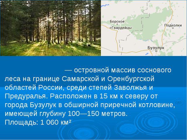 Бузулу́кский бор — островной массив соснового леса на границе Самарской и Оре...