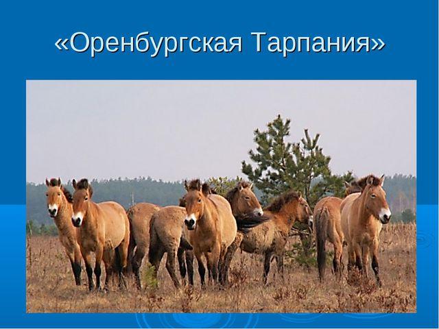 «Оренбургская Тарпания»