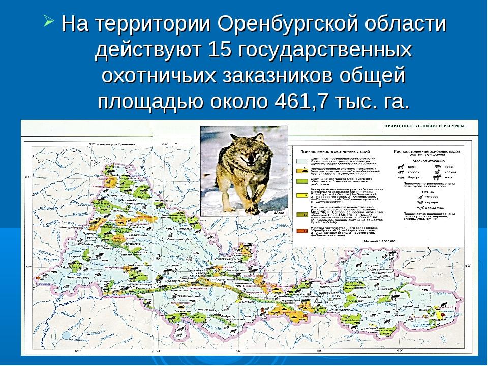 На территории Оренбургской области действуют 15 государственных охотничьих за...