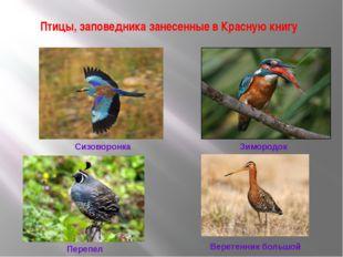 Птицы, заповедника занесенные в Красную книгу Сизоворонка Зимородок Перепел В