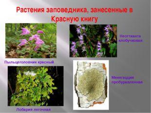 Растения заповедника, занесенные в Красную книгу Пыльцеголовник красный Неотт
