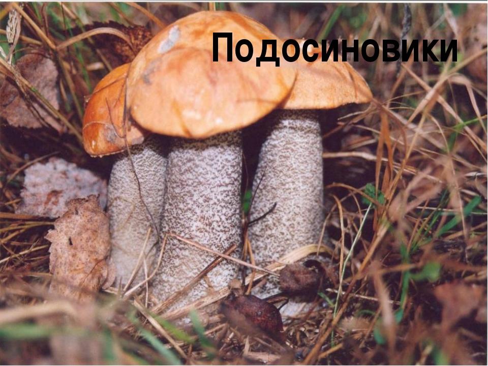 Подосиновики