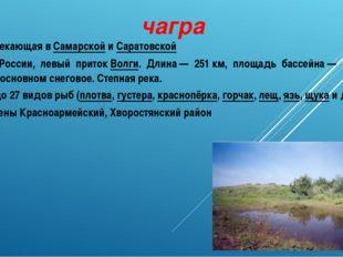 чагра Река, протекающая вСамарскойиСаратовской областях России, левый при