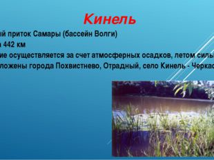 Кинель Правый приток Самары (бассейн Волги) Длина 442 км Питание осуществляет