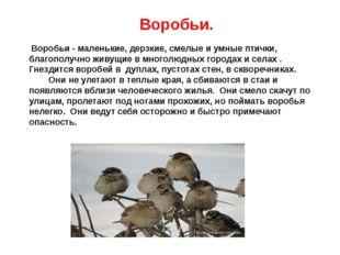 Воробьи. Воробьи - маленькие, дерзкие, смелые и умные птички, благополучно ж