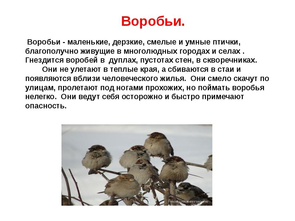 Воробьи. Воробьи - маленькие, дерзкие, смелые и умные птички, благополучно ж...