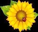 http://img-fotki.yandex.ru/get/9349/20573769.52/0_94204_946b02f5_L.png