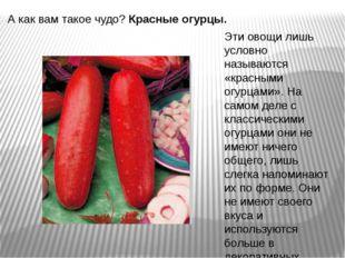 А как вам такое чудо?Красные огурцы. Эти овощи лишь условно называются «крас