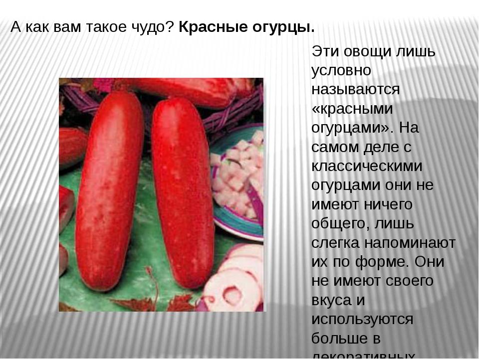А как вам такое чудо?Красные огурцы. Эти овощи лишь условно называются «крас...