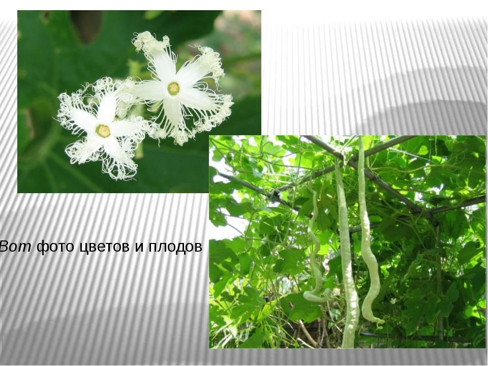 Вот фото цветов и плодов