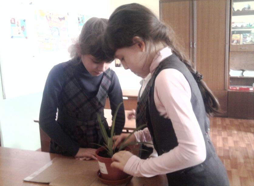 C:\Users\Саша\Desktop\Фотографии\Садим цветы фото\101MSDCF\Фото для школы\Фото0098.jpg