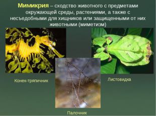 Мимикрия – сходство животного с предметами окружающей среды, растениями, а та