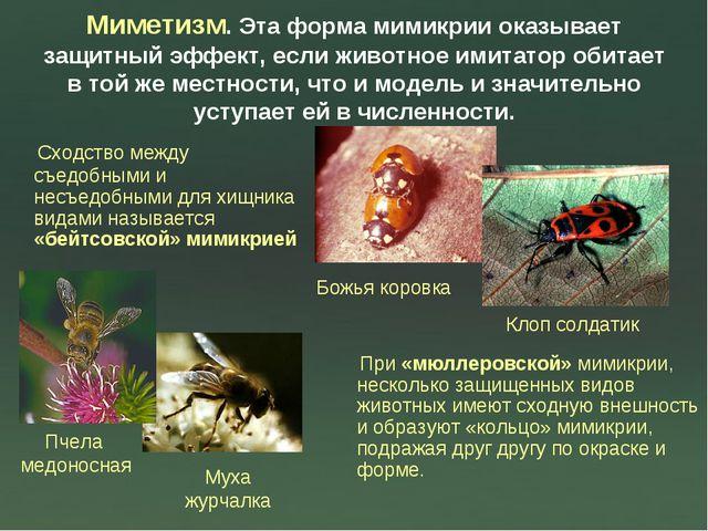 Миметизм. Эта форма мимикрии оказывает защитный эффект, если животное имитато...