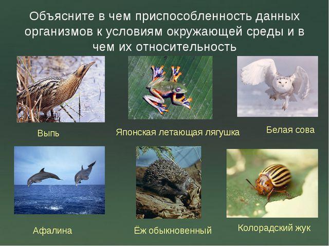 Объясните в чем приспособленность данных организмов к условиям окружающей сре...