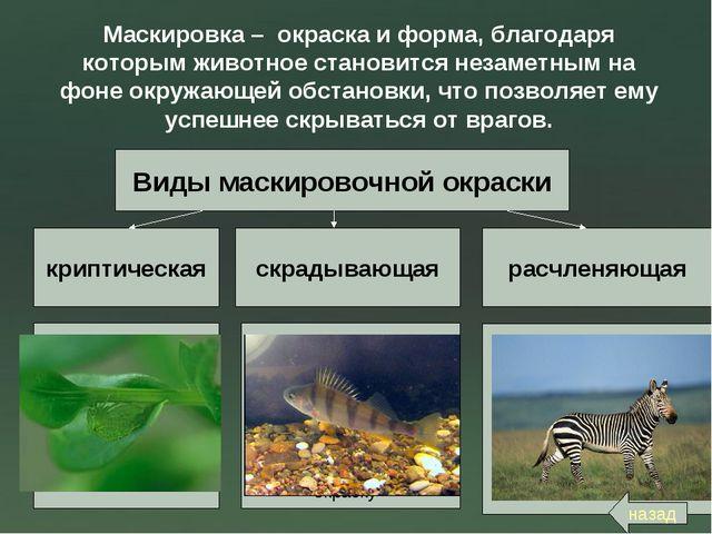 Маскировка – окраска и форма, благодаря которым животное становится незаметны...