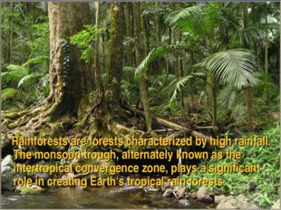 Rainforests are forests characterized by high rainfall. The monsoon trough,