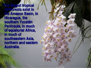 The largest tropical rainforests exist in the Amazon Basin, in Nicaragua, th