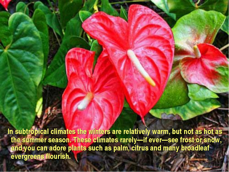 In subtropical climates the winters are relatively warm, but not as hot as t...