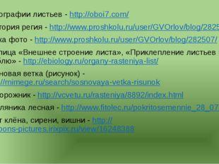 Фотографии листьев - http://oboi7.com/ Виктория регия - http://www.proshkolu