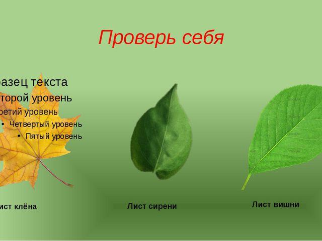 Проверь себя Лист клёна Лист сирени Лист вишни
