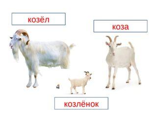 козёл коза козлёнок