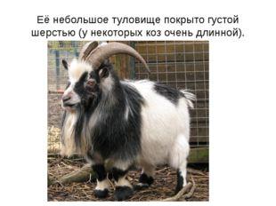 Её небольшое туловище покрыто густой шерстью (у некоторых коз очень длинной).