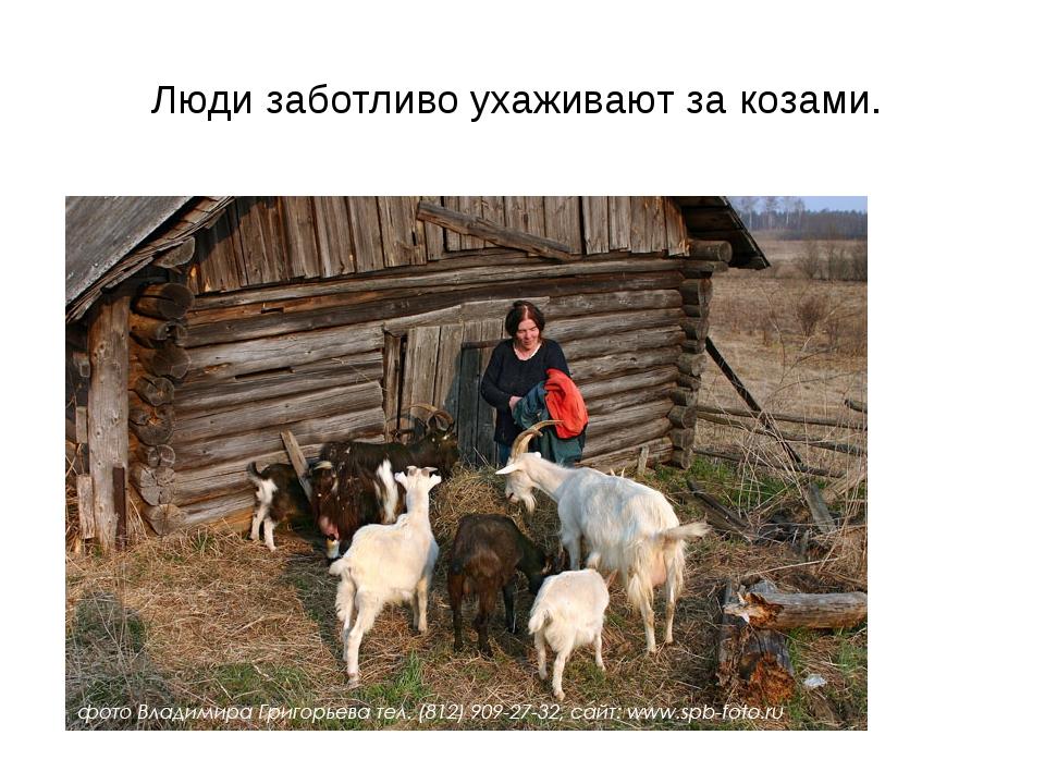 Люди заботливо ухаживают за козами.
