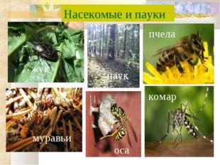Насекомые и пауки пчела комар оса паук жук муравьи