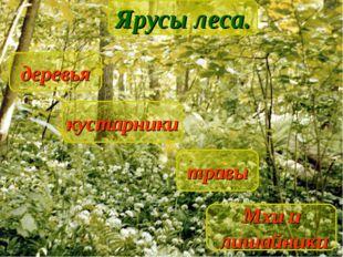 Ярусы леса деревья кустарники травы Мхи и лишайники Ярусы леса.