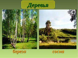 береза сосна Деревья