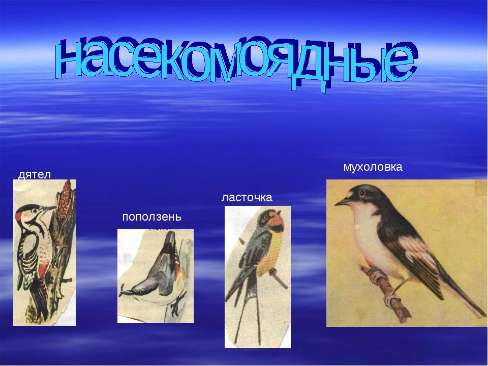 дятел поползень ласточка мухоловка
