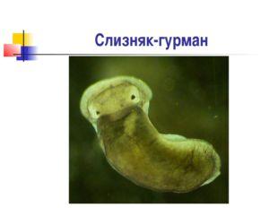 Слизняк-гурман