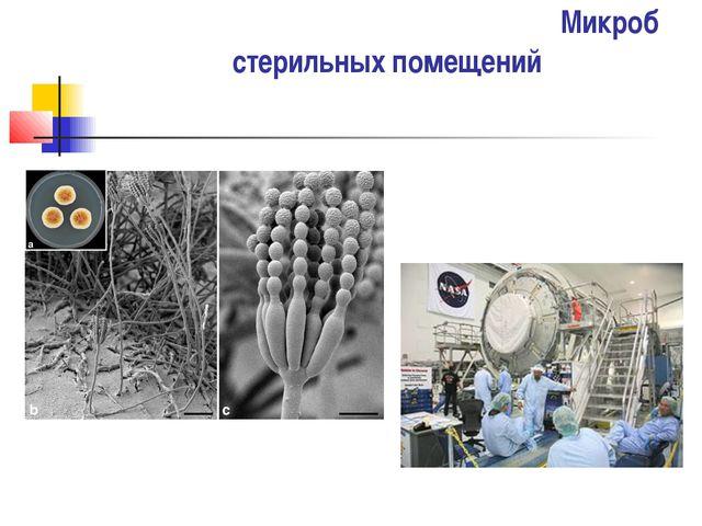 Микроб стерильных помещений