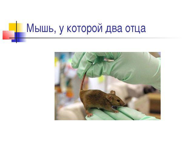 Мышь, у которой два отца