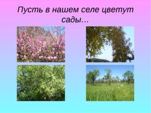 Пусть в нашем селе цветут сады…