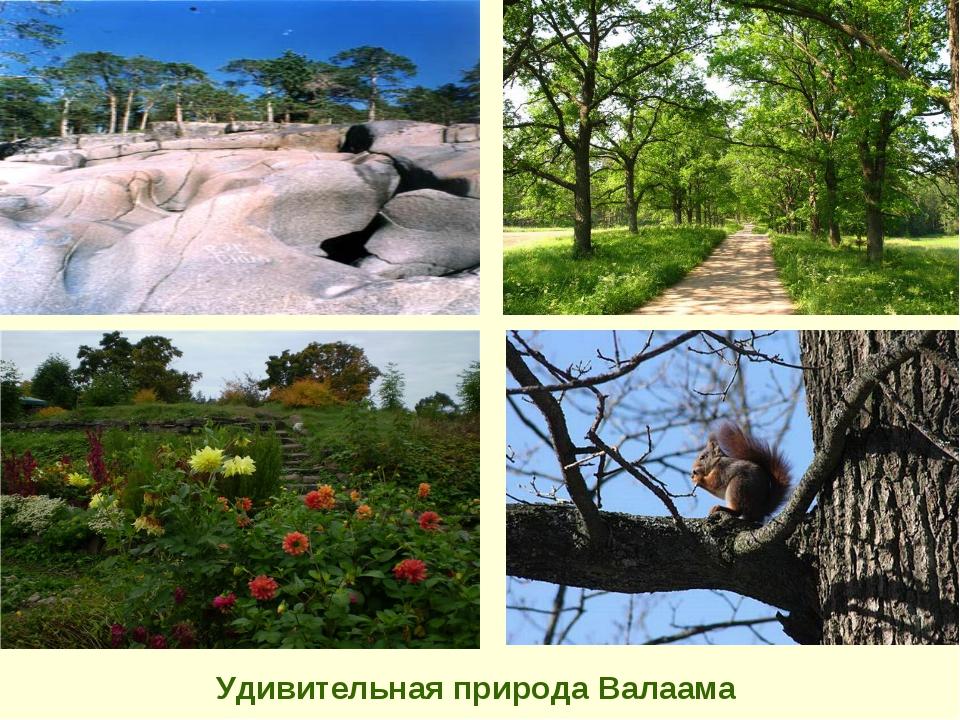 Удивительная природа Валаама
