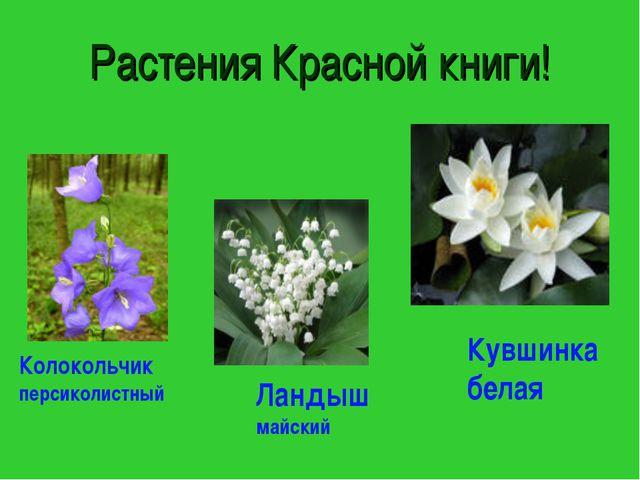 Растения Красной книги! Колокольчик персиколистный Ландыш майский Кувшинка бе...