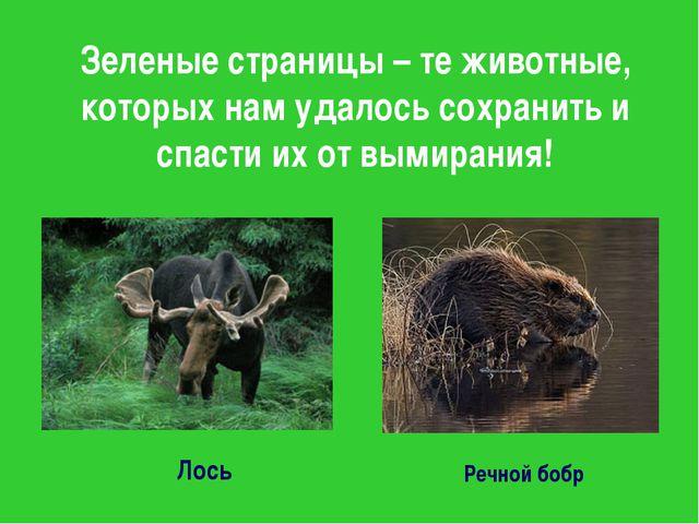 Зеленые страницы – те животные, которых нам удалось сохранить и спасти их от...