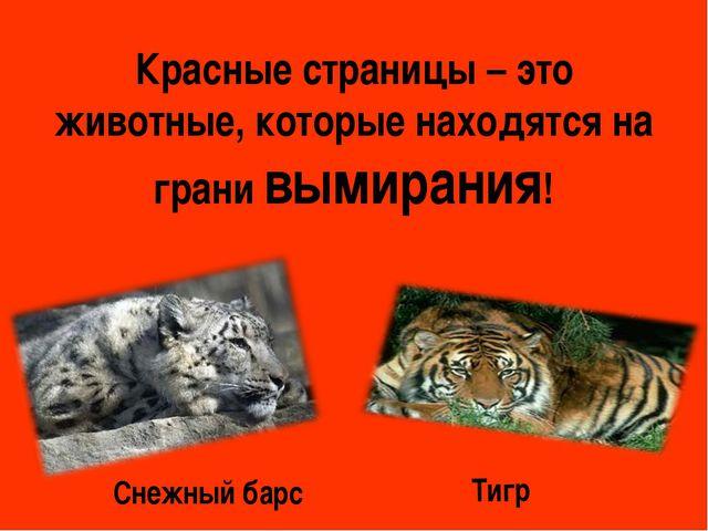 Красные страницы – это животные, которые находятся на грани вымирания! Тигр С...