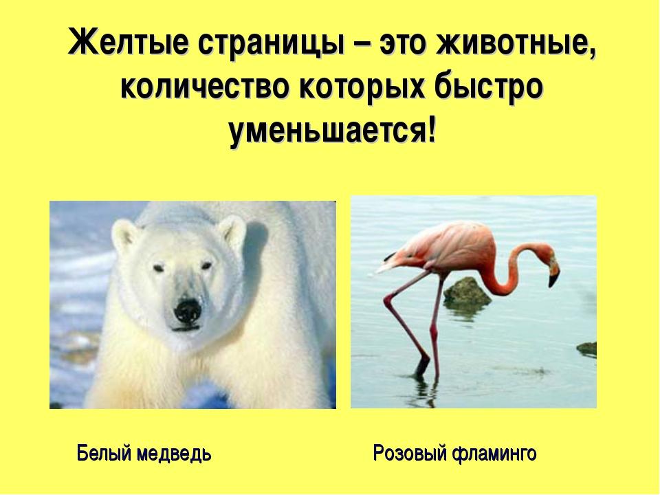 Желтые страницы – это животные, количество которых быстро уменьшается! Белый...