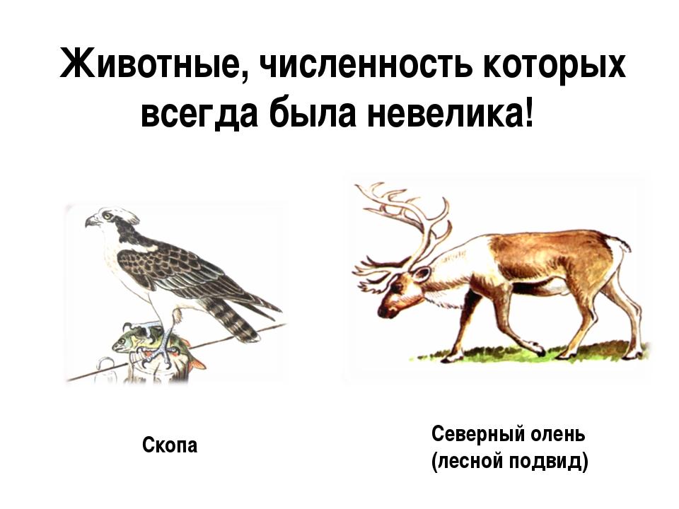 Животные, численность которых всегда была невелика! Скопа Северный олень (лес...