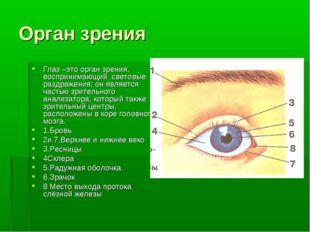 Орган зрения Глаз –это орган зрения, воспринимающий световые раздражения; он