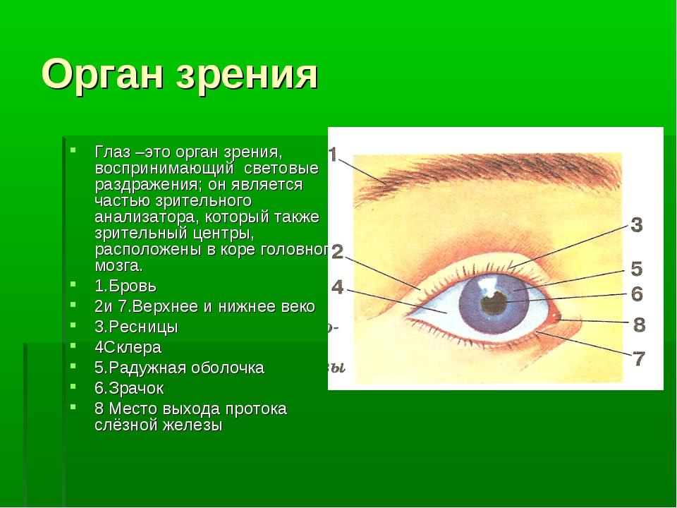 Орган зрения Глаз –это орган зрения, воспринимающий световые раздражения; он...