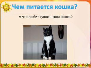 А что любит кушать твоя кошка?